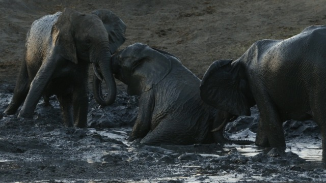 Elephants_note