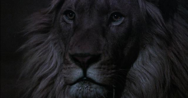 Lion-F0202301_1